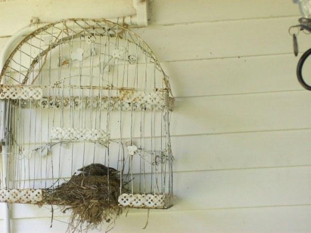 spring robin 2